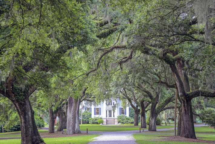Leafy avenue in Charleston