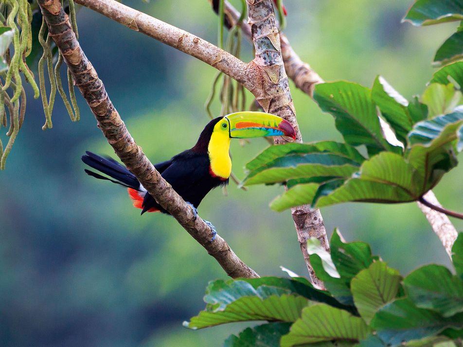 CLOSED: Win an incredible 14-night adventure to Costa Rica