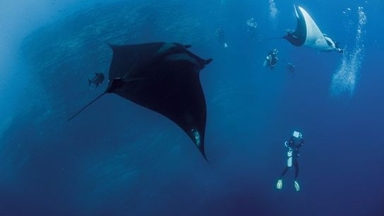 Diving from a liveaboard boat