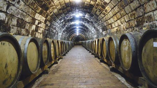 Patricius Wine Estate