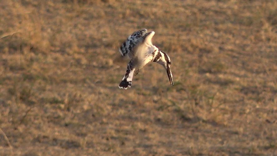 Birds of Safari Live