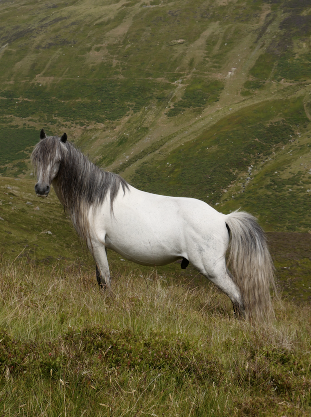 Ponies with long tails are elusive and have never been rounded up.
