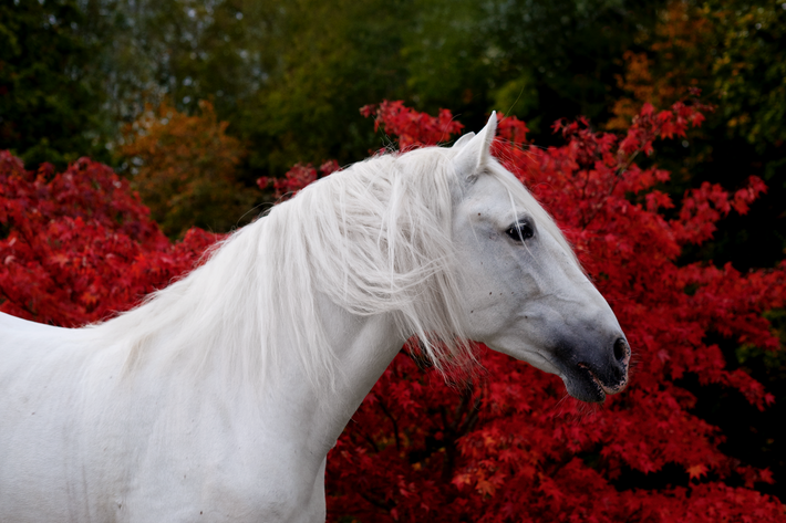 Alejandro, photographed in the countryside of Sussex, England, is Mary McCartney's own beloved white stallion.