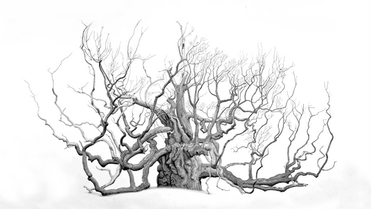 Striking Art Captures the Magic and Majesty of the Ancient Oak