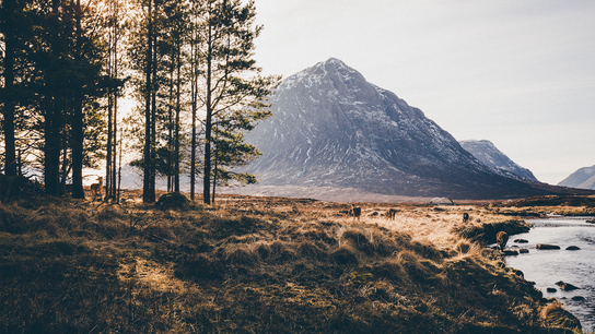 """Daniel Alford: """"This small herd of red deer drink from the River Etive in early morning ..."""