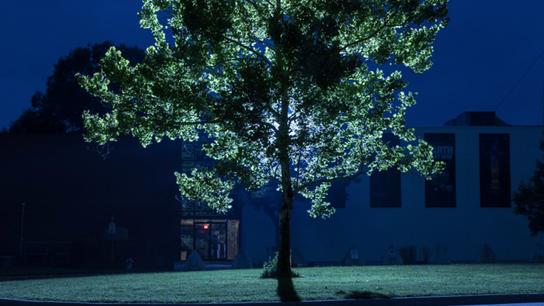 A moon tree outside Nasa.
