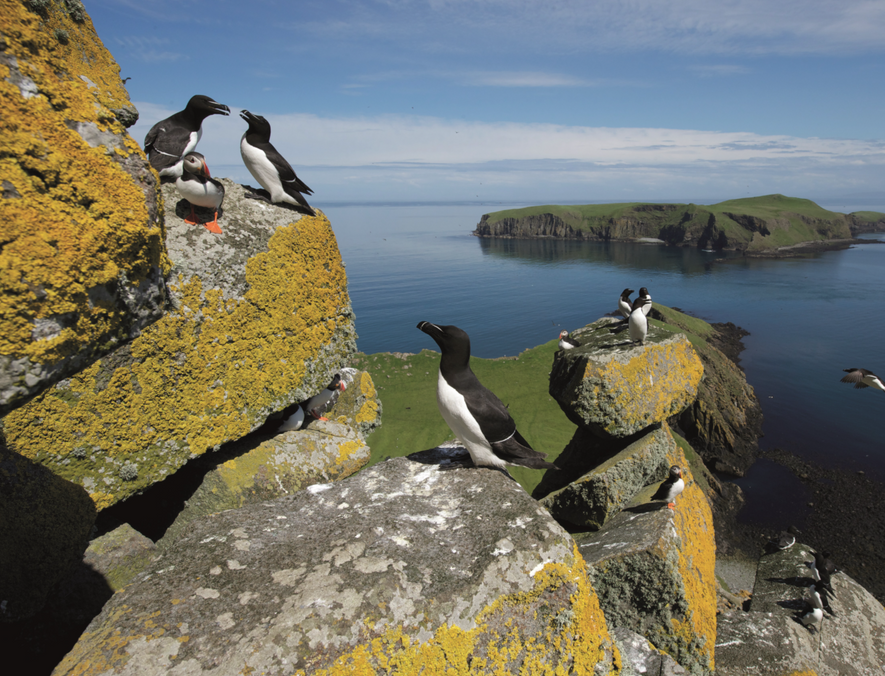 On the Shiant Islands, a rat eradication initiative was introduced to control the effect of the ...