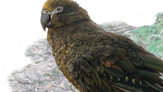 parrot promo 2