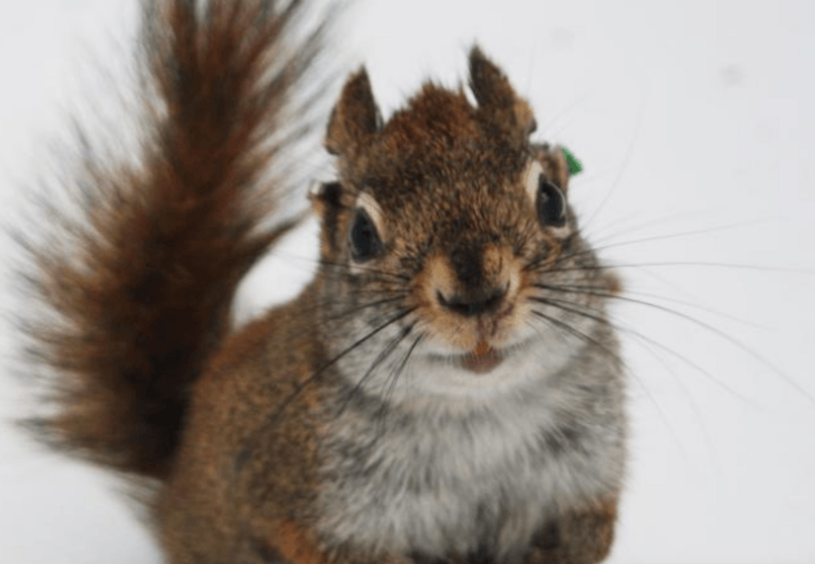 These Adorable Squirrels Are Also Baby-Killing Cannibals