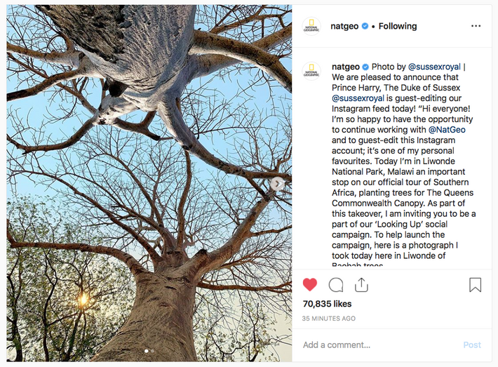 The Duke of Sussex's first post was a shot looking up at a canopy of Baobab ...