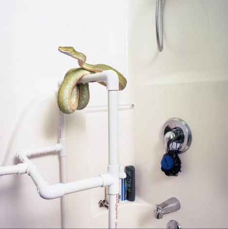 Snakes in the Shower? See Exotic Pets in Conventional Homes