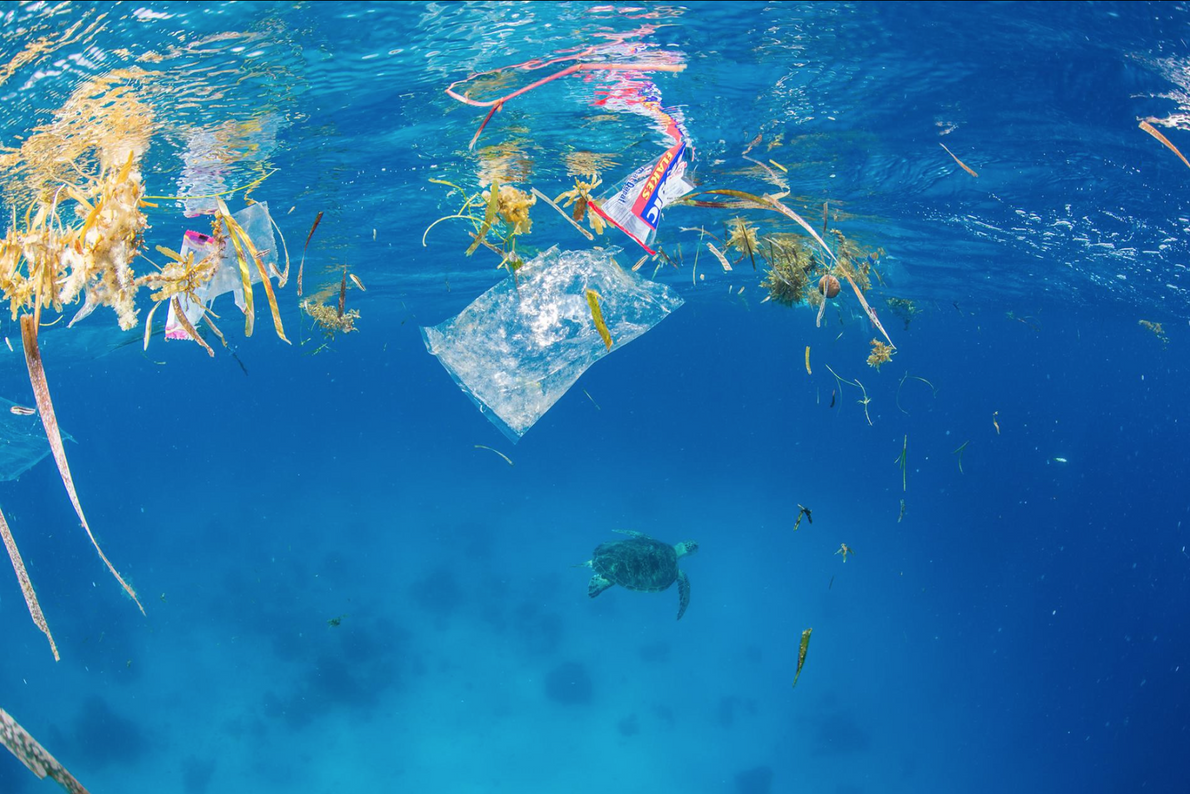 Marine flora mixes with plastic packaging at the water's surfac