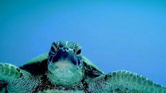 Sea Turtles 101
