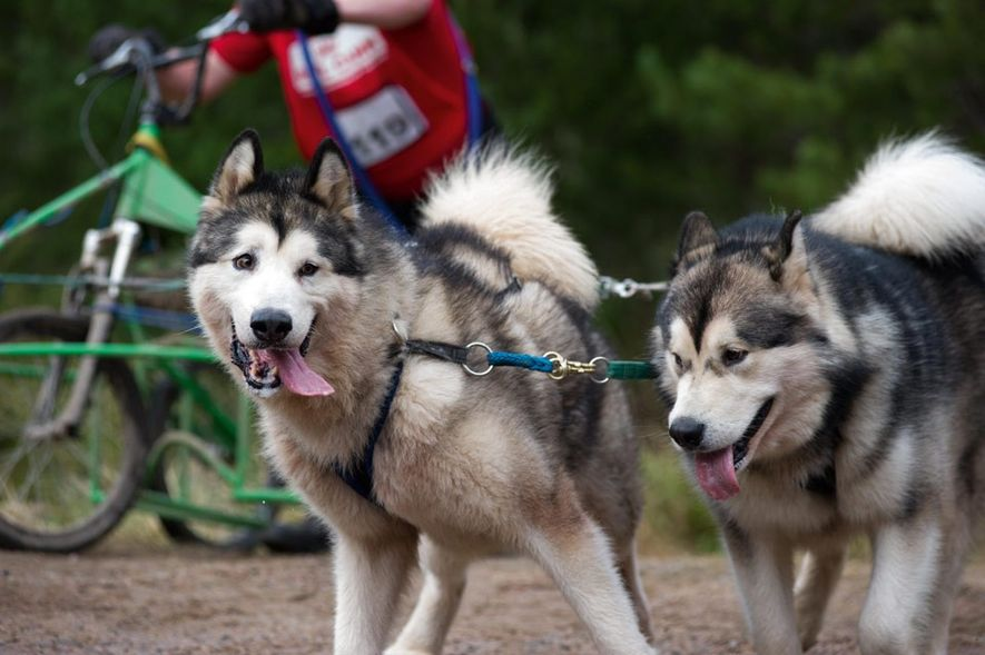 Siberian Husky Club of Great Britain, Aviemore