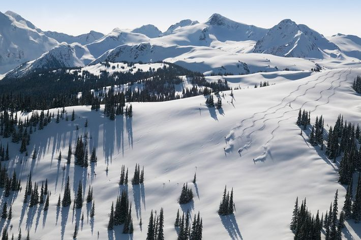 Skiing the Piccolo Flute at Whistler Blackcomb Ski Resort, British Columbia, Canada. Image: Destination BC/Randy Lincks