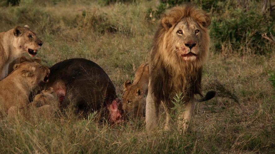 Mother of Lions: Sneak Peek