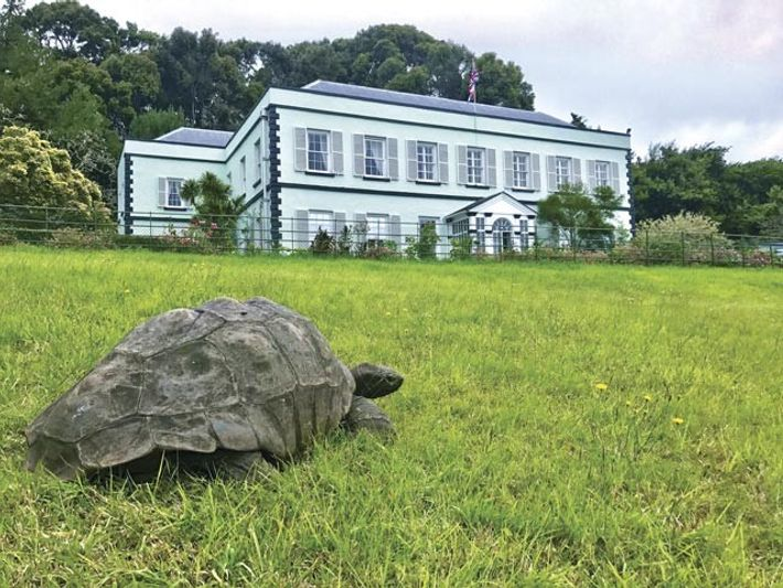 Jonathan the giant tortoise was brought to the islandfrom theSeychellesin 1882 at about 50 years of ...