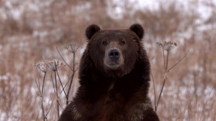 Step Into The Heart of Alaska's Extreme Wilderness - Alaska's Grizzly Gauntlet
