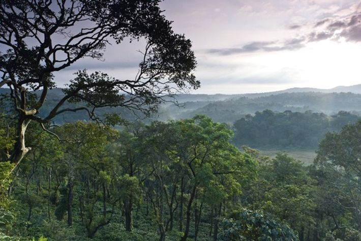 Forest near Madikeri, Western Ghats. Image: SuperStock