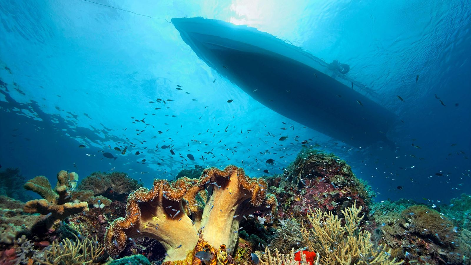 The largest reef system in the world, the Great Barrier Reef stretches for over 1,400 miles. ...
