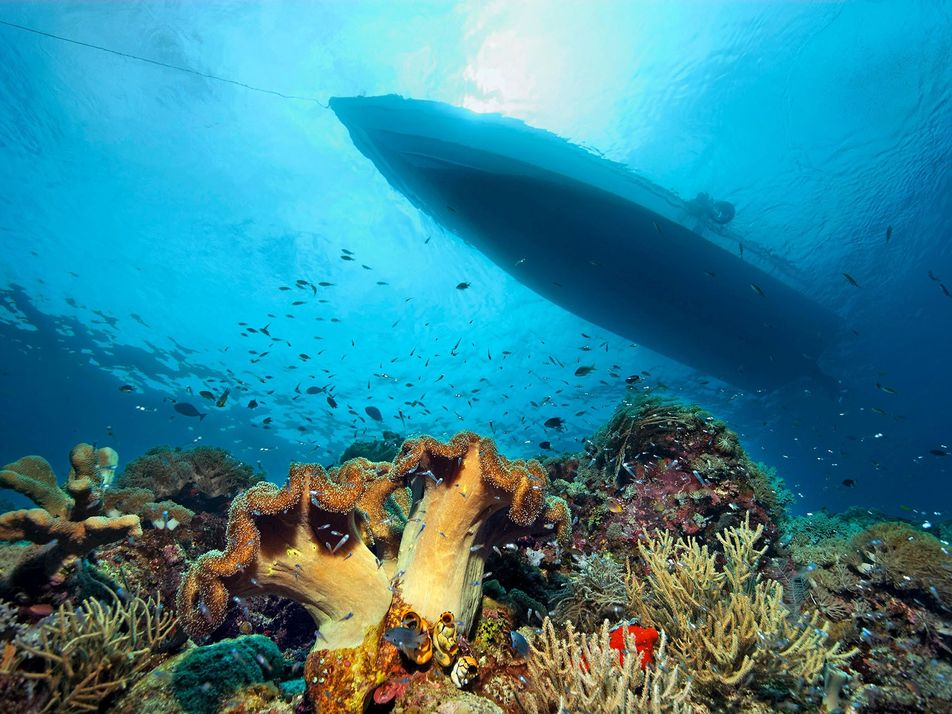 Can we save the coral reefs?