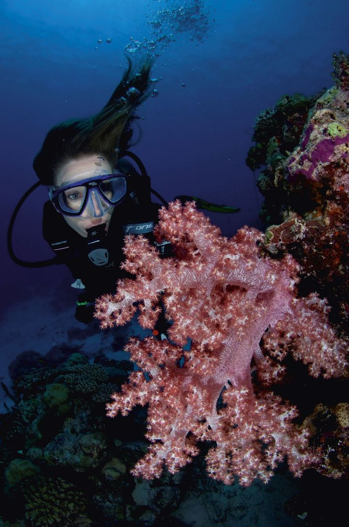 Getting up close to a soft coral at Vaavu Atoll