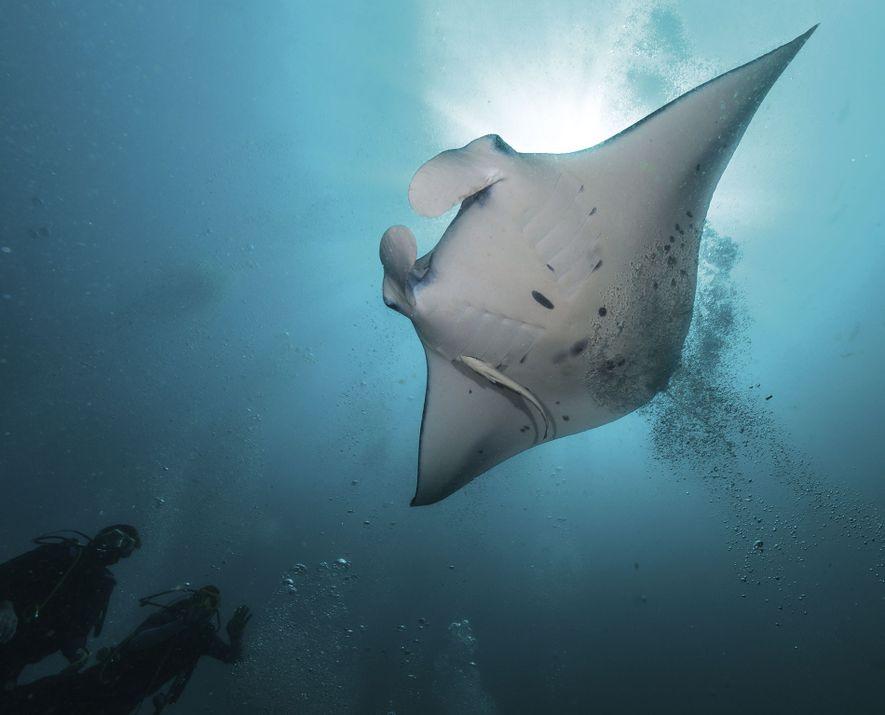 Maldives: Top five reasons  to venture underwater