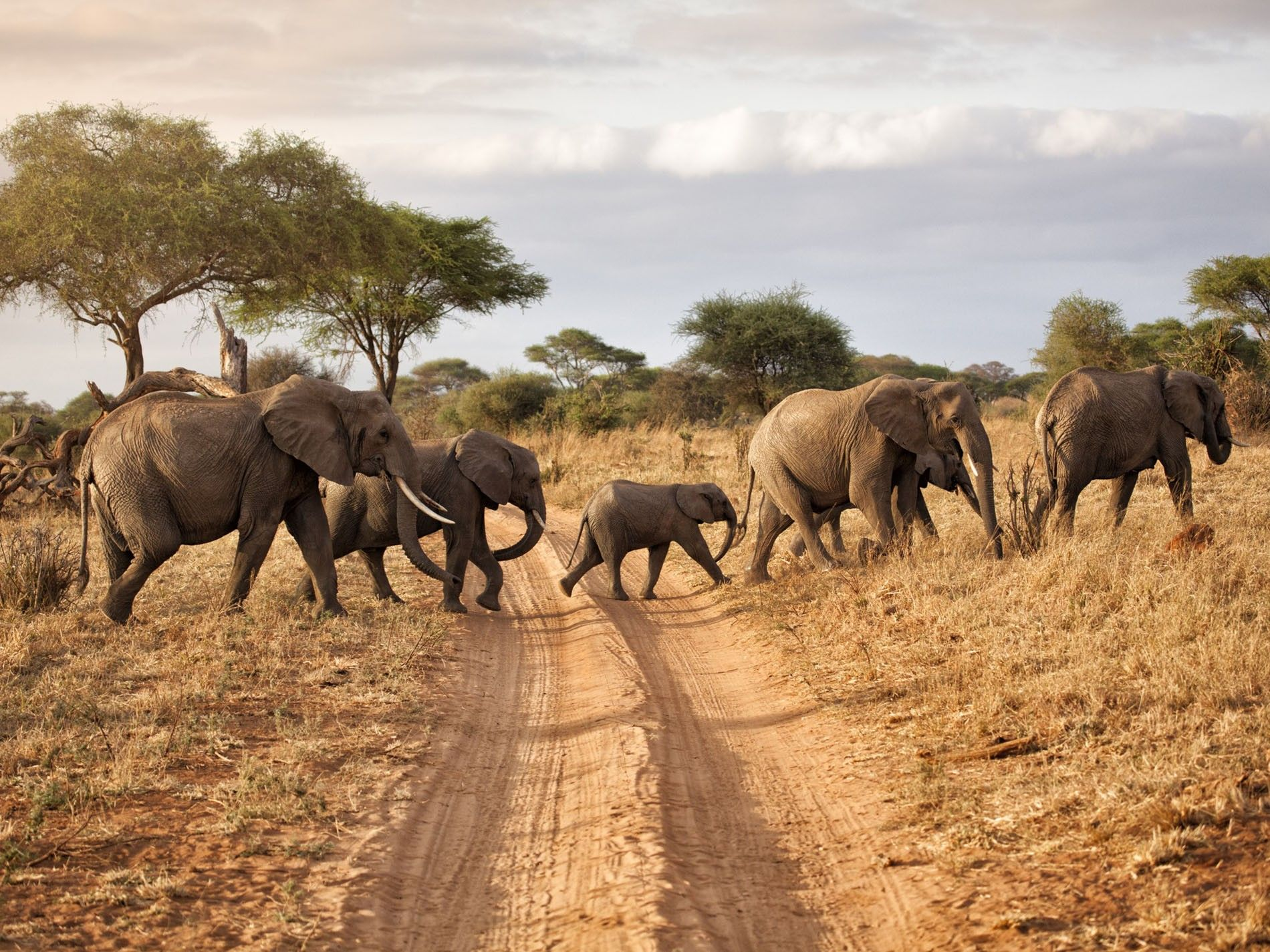 Africa Sky Safari