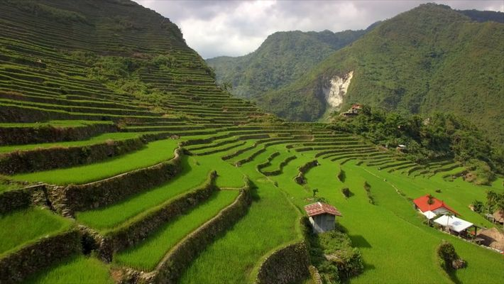 Soar Over the Lush Rice Terraces of the Philippines
