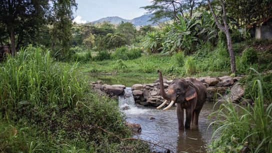 Elephant Nature Park's owner, Lek, was one of the first people to speak out against their ...