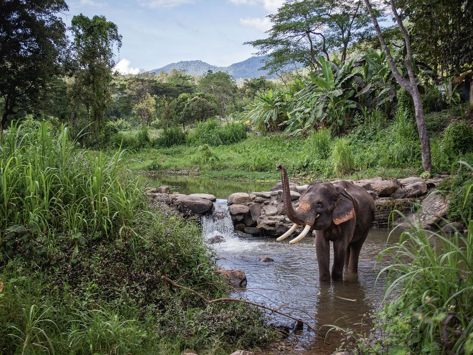 How to navigate elephant tourism in Thailand