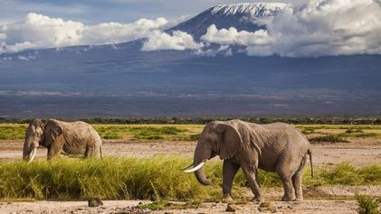 Where have all the elephants gone?