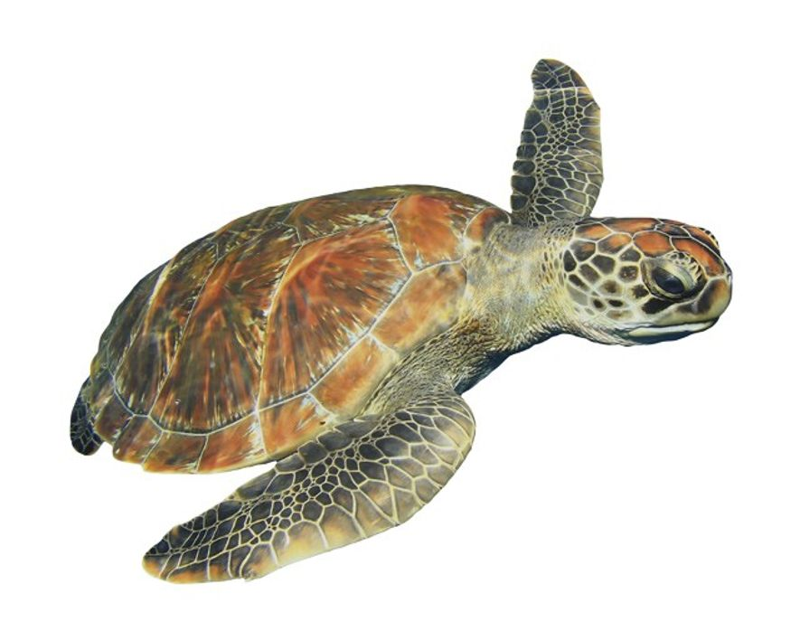Are turtle hatcheries unethical?