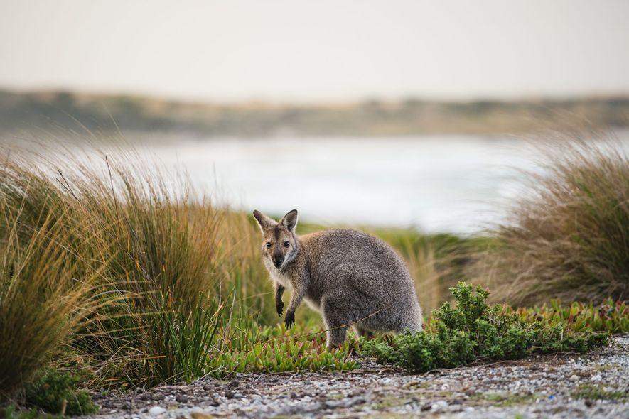 Tasmania: Adventure in Australia's island state