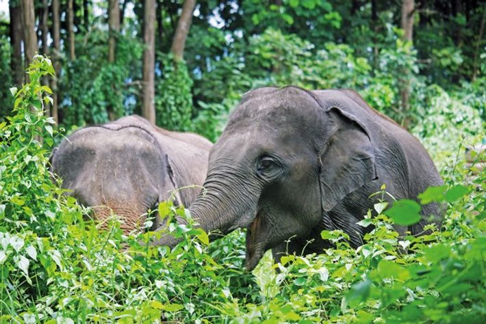 Allowing elephants to simply be elephants is the commitment at the beating heart of Elephant Valley ...