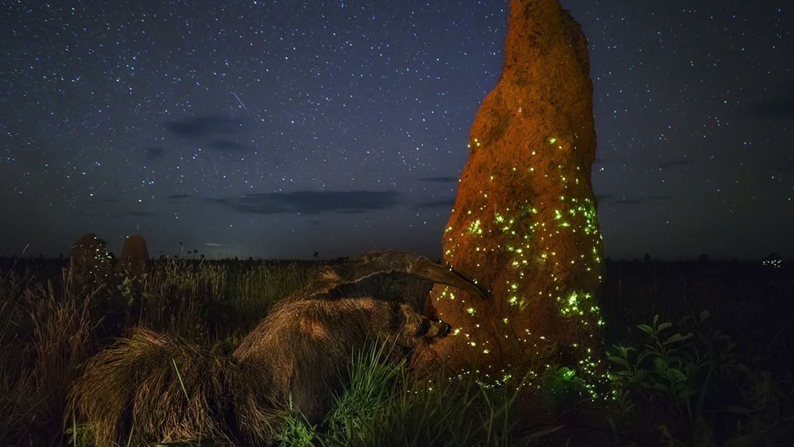 Under a starry sky at the start of the rainy season, this termite mound on the ...