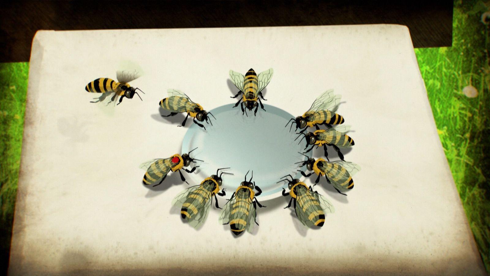 Bees talk