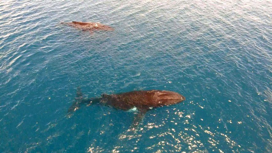 The Whales of Australia