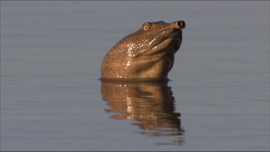 The Unique Turtles of the Lake Khanka