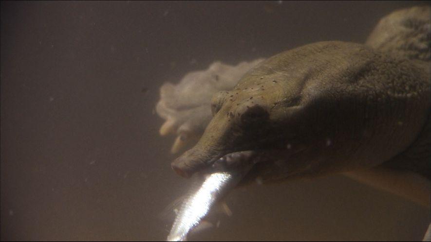 The Underwater Predators of Ussuria