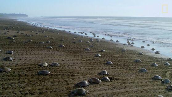 Celebrating Turtles, Saving Turtles: World Turtle Day 2019