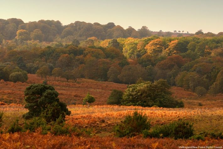 Rich colours in the autumn landscape of the New Forest, Hampshire