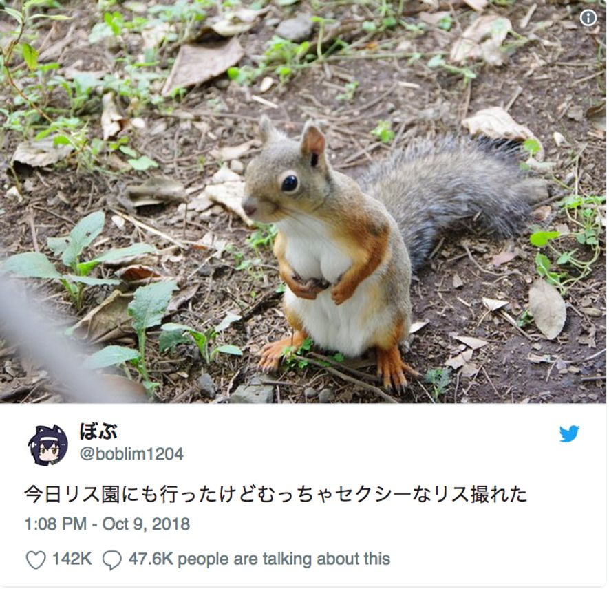 The squirrel that sparked the Twitter storm in Japan.