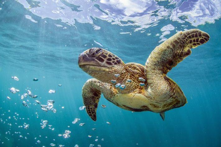 Exploring Western Australia's Coral Coast 2