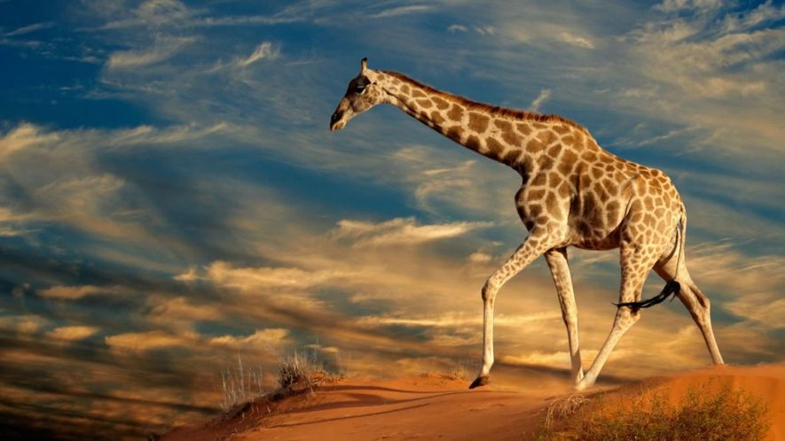 WORLD GIRAFFES DAY