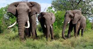 Jabu, Morula and Thembi