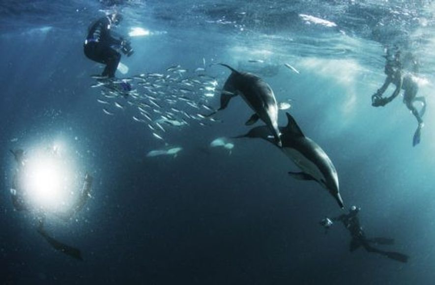 Common dolphins. Image: Morne Hardenberg.