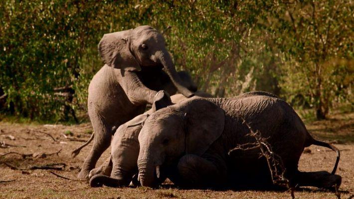 World Elephant Day - August 12