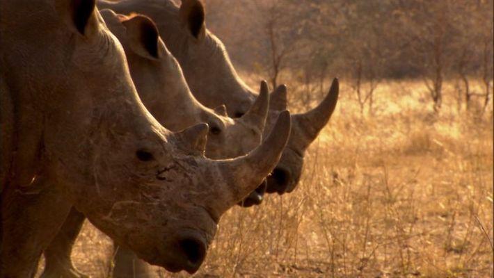World_Rhino_Day_22Sept_nobugUK