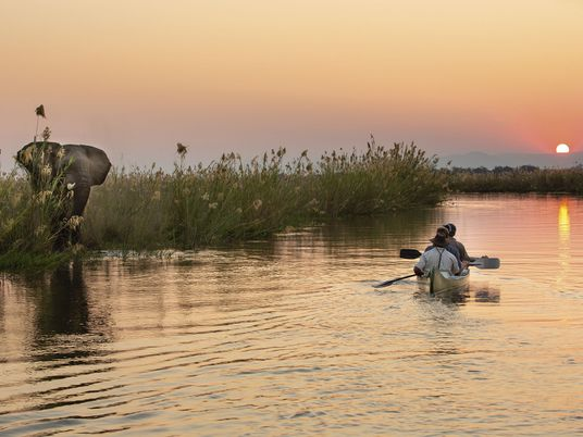 Recovery and renewal: the return of wildlife tourism in Zimbabwe